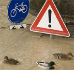Ducks in Flood